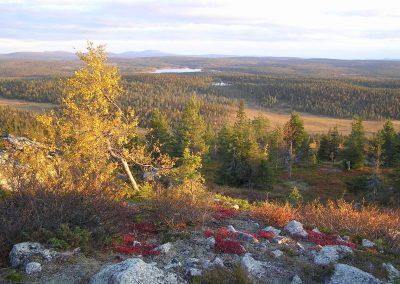 FellTrek autumn tints