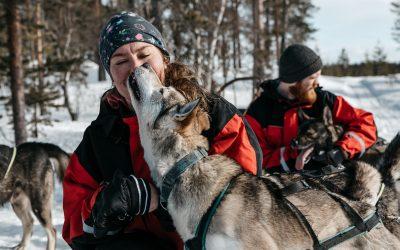 Wild Motion Huskies