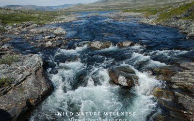 Wild Nature Wellness