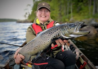 Wild brown trout from wilderness lake of Koutus DiscoverMuonio Elämysvirta Tomi Salonen
