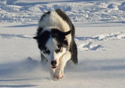 käskero dog sledding
