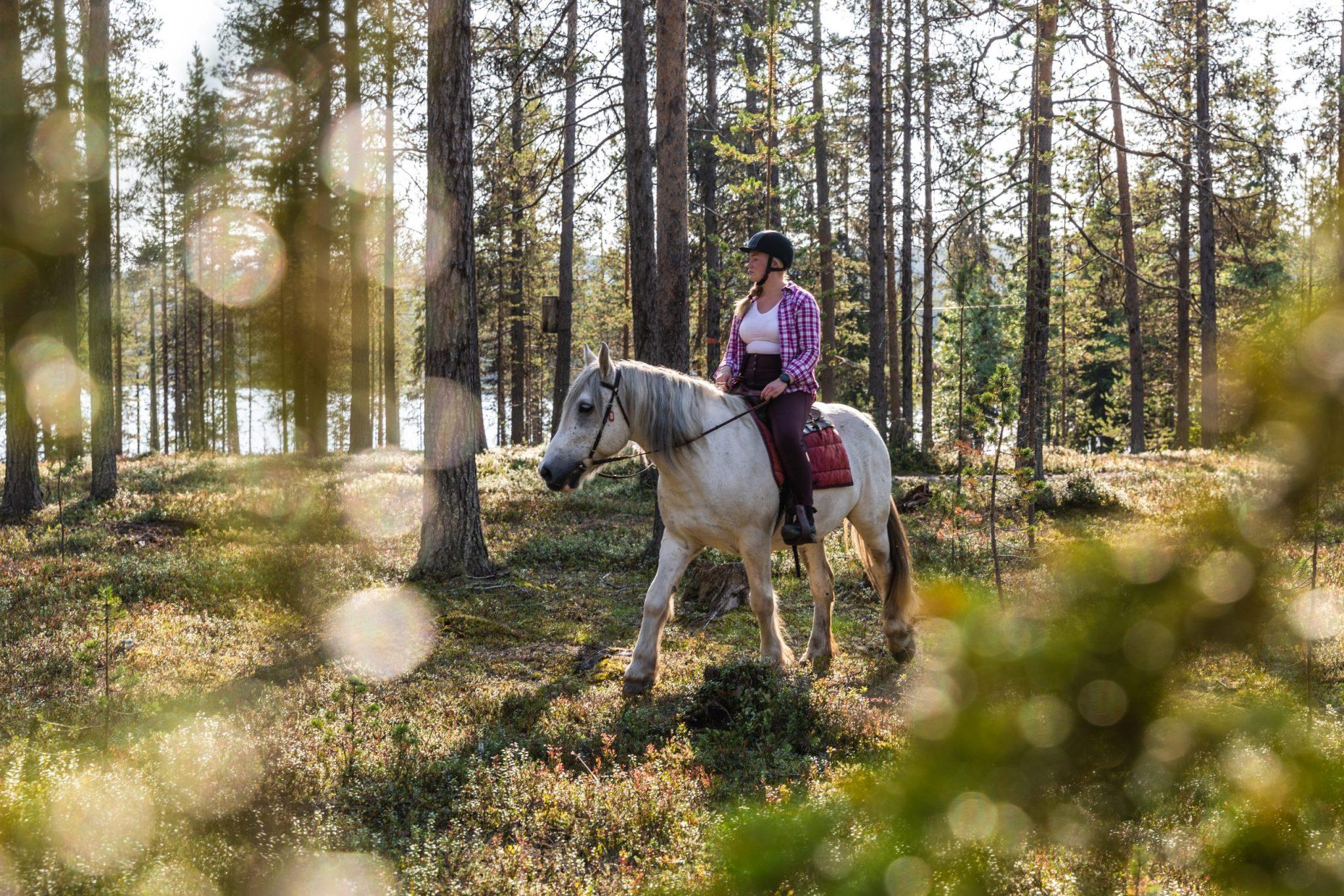 Horseback riding DiscoverMuonio Activities Horses Photo by House of Lapland Terhi Tuovinen