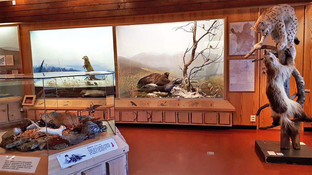 Pallastunturin luontokeskus