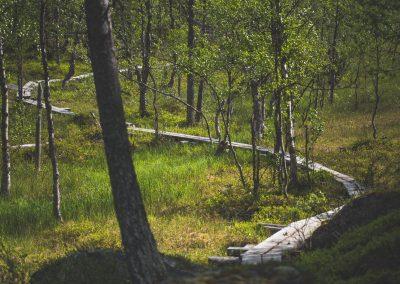 Pitkokset Pallas Yllästunturin kansallispuisto Kuva Heikki Sulander Rinkkaputkicom metsähallitus