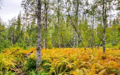 Pyhäjoen luontopolku
