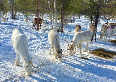 ReindeerAvenue