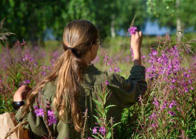 Wild herbs Discovermuonio activities phtotoby Sanni Vierela